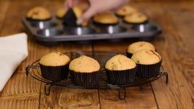 Nytt bakade muffin på att kyla kuggen lager videofilmer