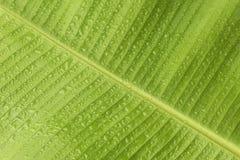 Nytt bananblad med vattendroppar arkivbilder