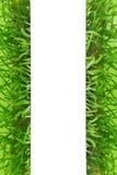 Nytt baner för gräsmellanrumsvit Royaltyfri Bild