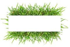 Nytt baner för grönt gräs Royaltyfria Bilder