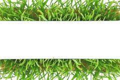 Nytt baner för grönt gräs Royaltyfri Foto