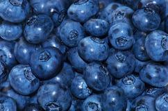 nytt blåbär Arkivbilder
