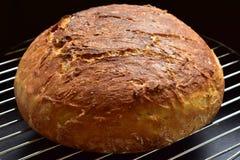 Nytt bröd med den frasiga skorpan Royaltyfria Bilder