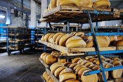 Nytt bröd på en hylla i ett bageri royaltyfri fotografi