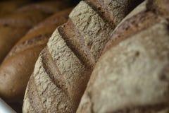 Nytt bröd på hyllan Royaltyfria Bilder