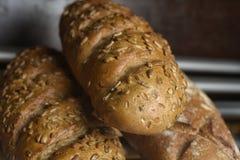 Nytt bröd på hyllan Royaltyfri Bild
