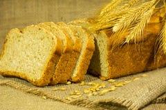 Nytt bröd, veteöron och korn royaltyfri bild