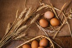 Nytt bruna ägg och vete på linnebakgrund Royaltyfri Fotografi