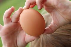 Nytt brunt ägg! Arkivfoton