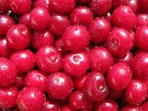 nytt Cherry Royaltyfri Bild