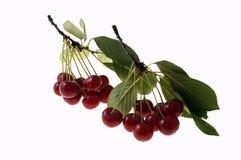 nytt Cherry Royaltyfri Fotografi