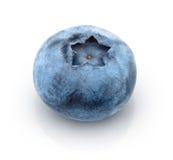 Nytt ett blåbär Arkivbild