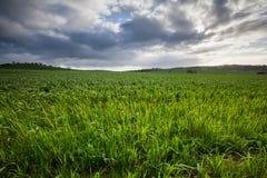 nytt fält Arkivbild