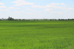 nytt fält för grönt gräs Royaltyfri Bild