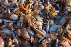 Nytt fångad havsfisk och skaldjur arkivfoto