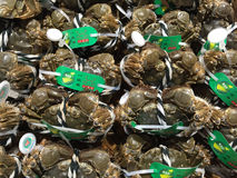 Nytt fångade mjuka Shell Crab, skaldjur, Shanghai marknad, Kina Royaltyfri Bild