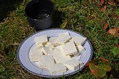 Nytt förberedd goat' s-ost hand-göras på en rund vit platta bredvid ett svart kopp teanseende på gräset royaltyfria bilder