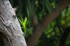 Nytt förgrena sig att växa på en gammal Tree fjädrar in royaltyfri bild
