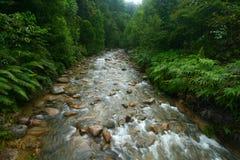 nytt flodvatten för skog Royaltyfri Fotografi