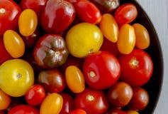 Nytt från trädgårds- tomater i bunke Fotografering för Bildbyråer