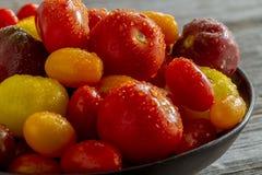 Nytt från trädgårds- tomater i bunke Royaltyfria Foton
