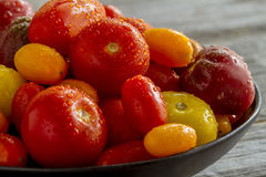 Nytt från trädgårds- tomater i bunke Arkivfoton