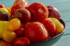 Nytt från trädgårds- tomater i bunke Royaltyfria Bilder