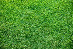 nytt geen gräsfjädern Arkivfoton