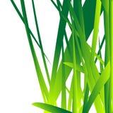 nytt gräs Arkivbild