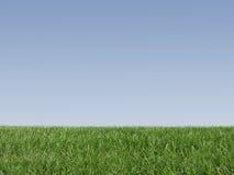 nytt gräs Fotografering för Bildbyråer