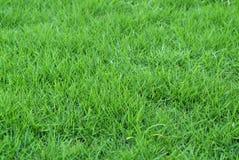 nytt gräs royaltyfria bilder