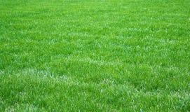 Nytt gräs royaltyfri foto