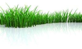nytt gräs Royaltyfri Fotografi