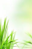 nytt gräs för bakgrund Arkivbilder