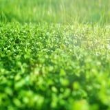 nytt gräs för fält Textur för grönt gräs - abstrakt vårbackgro Royaltyfri Bild