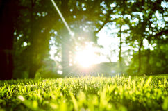 Nytt gräs i den starka sommarsolen Royaltyfria Bilder