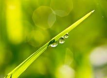 Nytt gräs med daggdroppar Arkivbild
