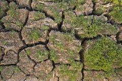 Nytt gräs som växer på sprucken jord royaltyfria foton