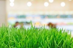 nytt gräsvete Arkivfoto