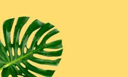 Nytt grönt blad vektor illustrationer