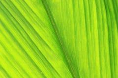 nytt grönt blad. Arkivbild