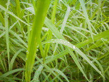 Nytt grönt blad Arkivfoto