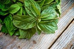 Nytt grönt blad av Melissa över vit Arkivfoton