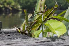 Nytt grönt blad på förfallen träbakgrund Naturlig compo arkivbild