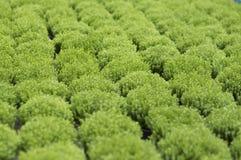 Nytt grönt gräs Royaltyfri Foto