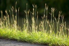 Nytt grönt gräs Royaltyfria Foton