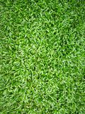 Nytt grönt gräs för bakgrund och textur Fotografering för Bildbyråer