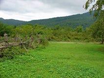 Nytt grönt gräs i berg Arkivbilder