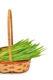 Nytt grönt gräs i den vide- korgen Royaltyfri Foto
