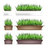 Nytt grönt gräs i rektangulära krukor Beståndsdel av den hem- dekoren Symbolet av tillväxt och ekologi Isolerat på vit Arkivbild